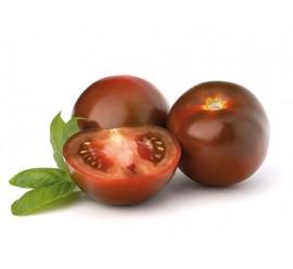 tomate morenito inj.