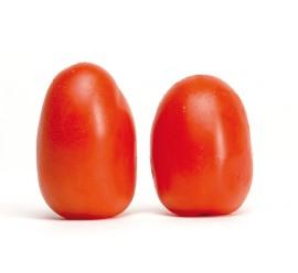 tomate pera encañar tolerante