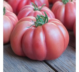 Tomate Monterosa